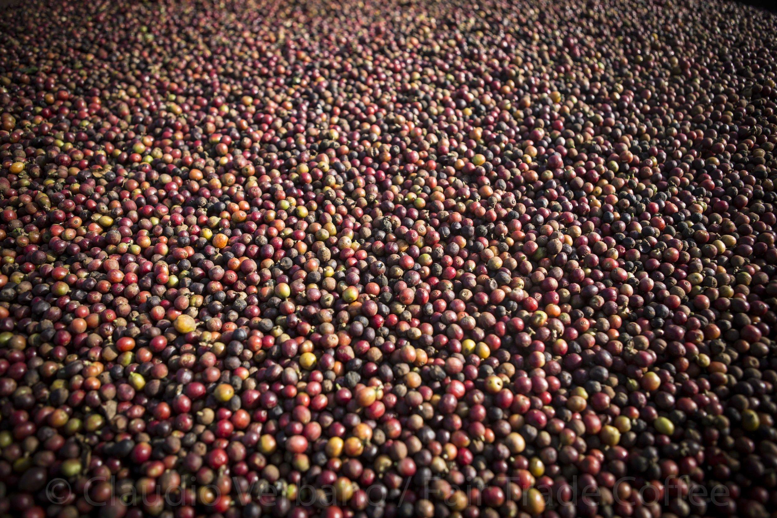 Fair Trade Coffee by Claudio Verbano 25.jpg
