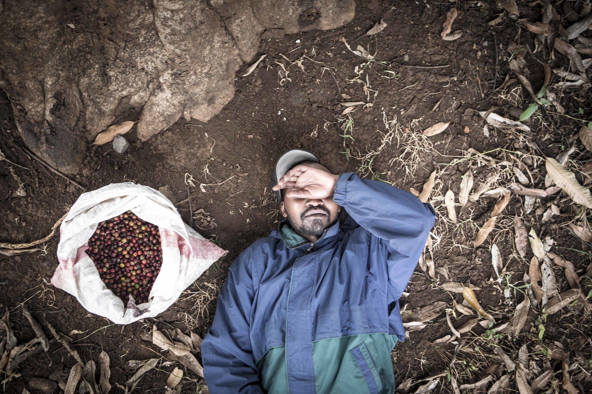 Fair Trade Coffee? - Coffeeproduction at Mount Kilimanjaro in Tanzania