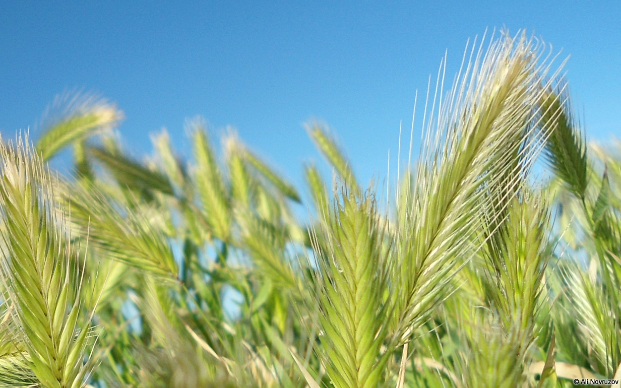 grass+background.jpg