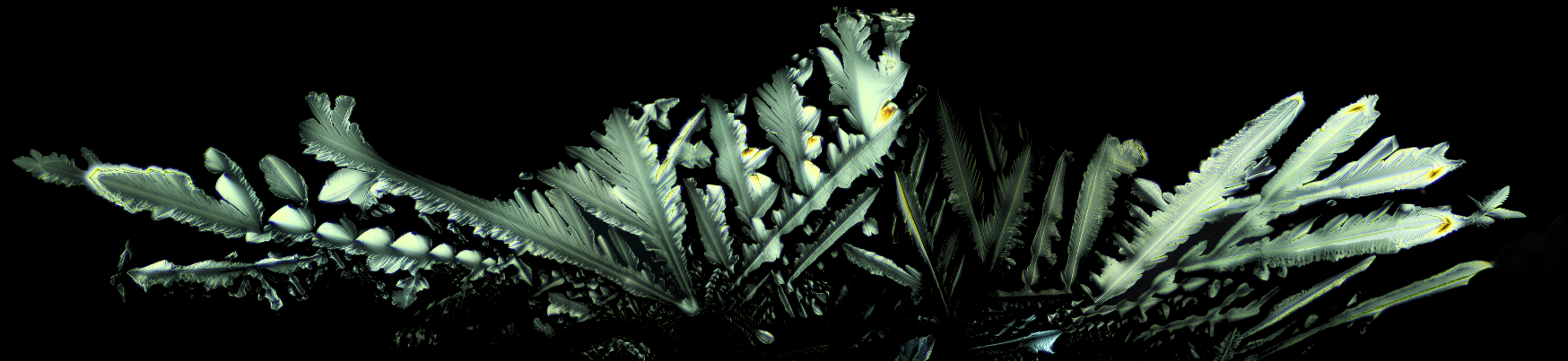 Crystalline Feathers