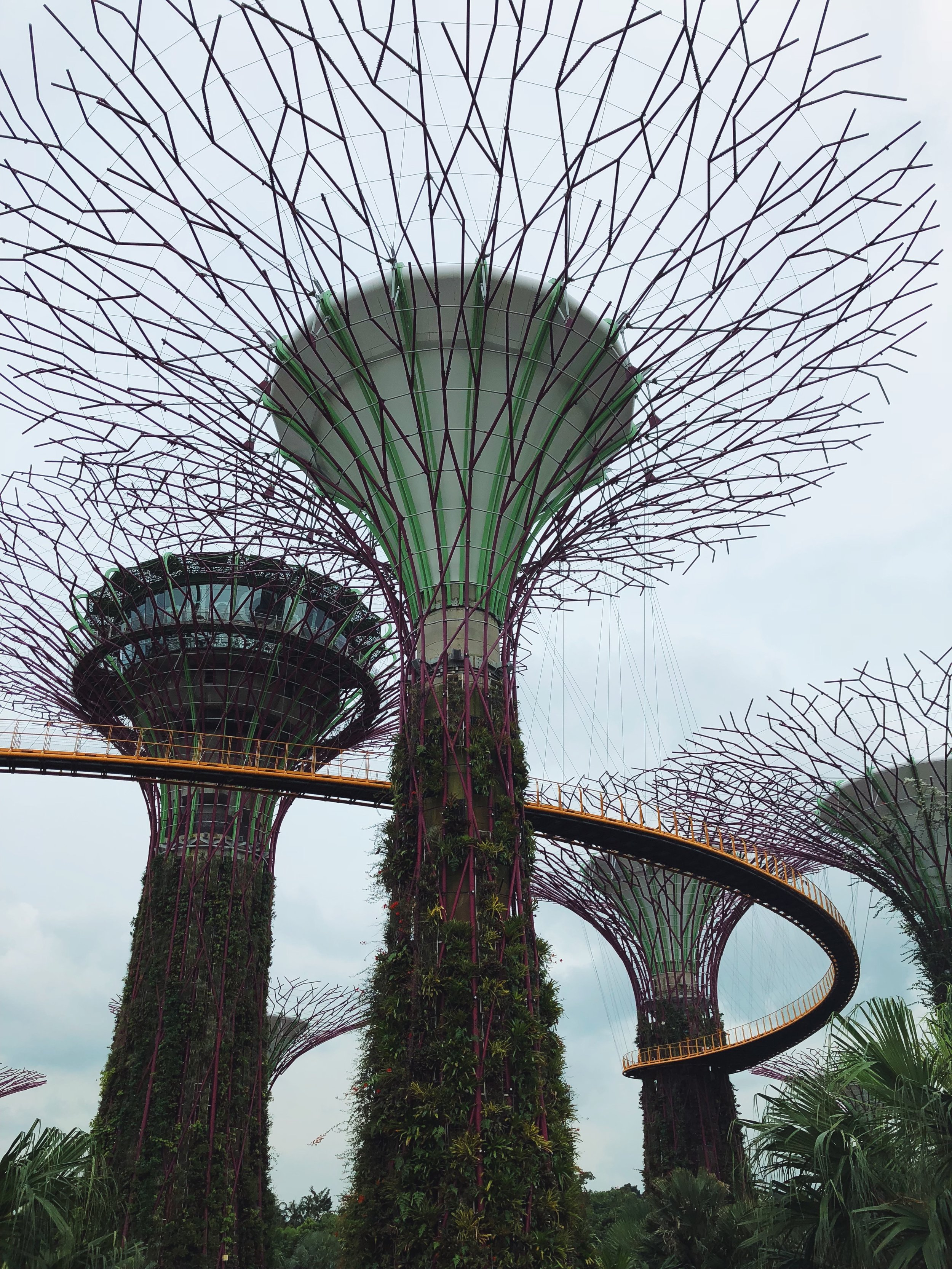 - After purchasing my ticket for the Gardens by the Bay (about $30 USD/ $38 AUD) and gawking at the Supertree Grove, I made my way to Satay by the Bay to try some of Singapore's famous chicken rice.