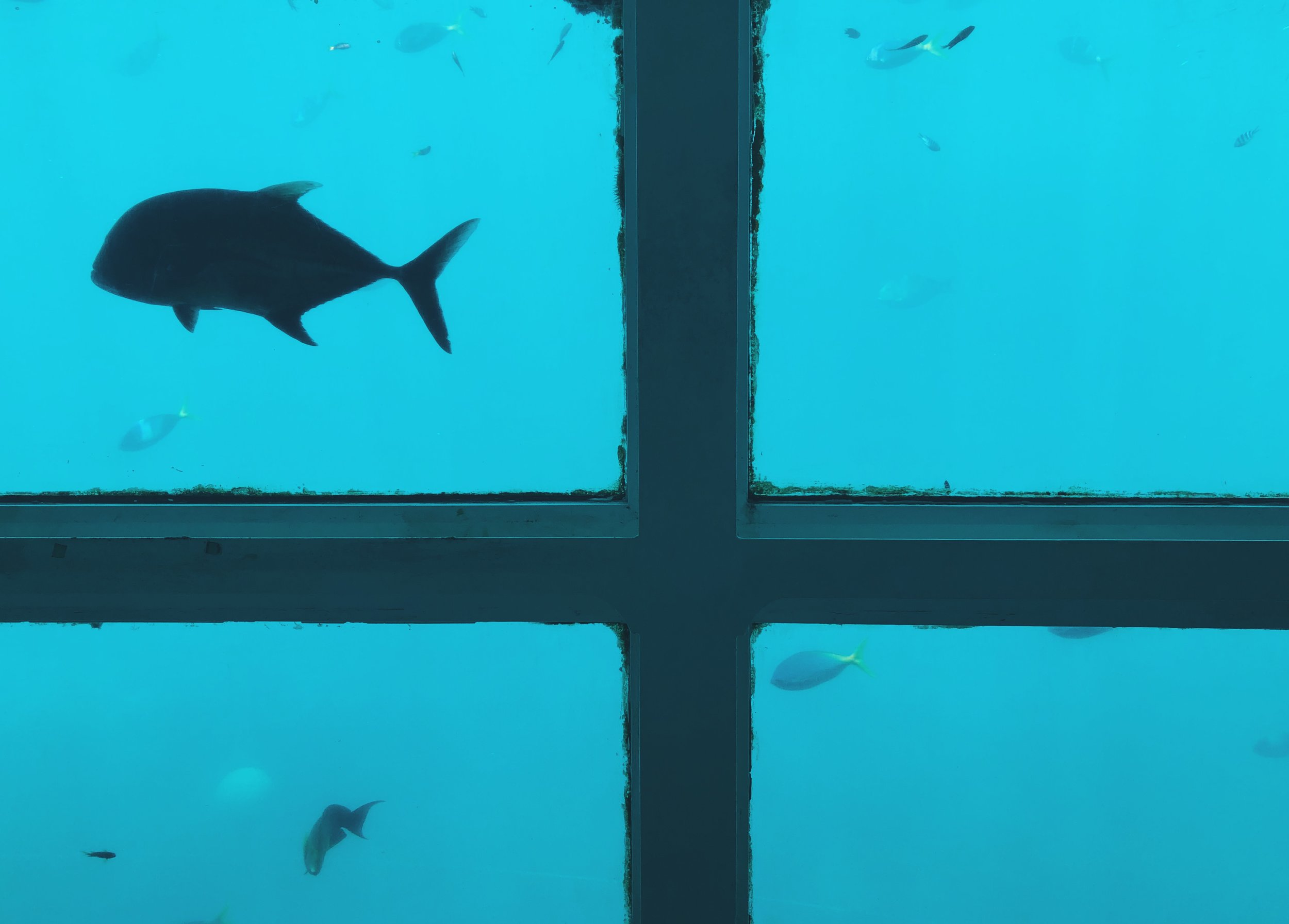 View from the underwater viewing chamber.