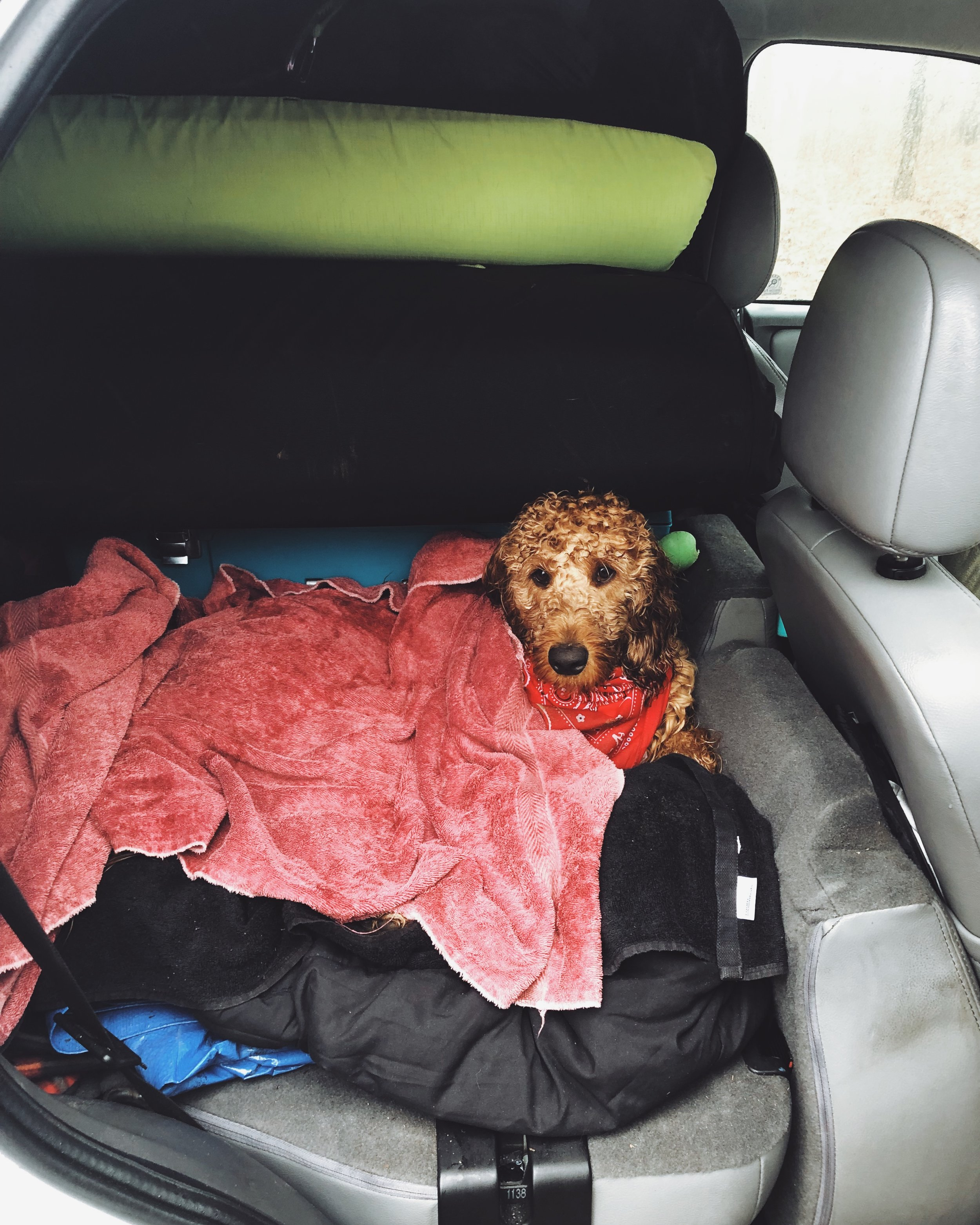 - We are really lucky that Romeo is a great car dog. For a long trip, we make sure to bring an old comforter to make a cozy spot for him that we can then move to the tent. We also bring a few old towels to keep in the car for at the end of our hikes because Romeo loves to get wet and dirty! I use a silicone kids' cup as a car water bowl for him. It works great because I can leave it in the backseat cupholder for him to access without too much of a mess.
