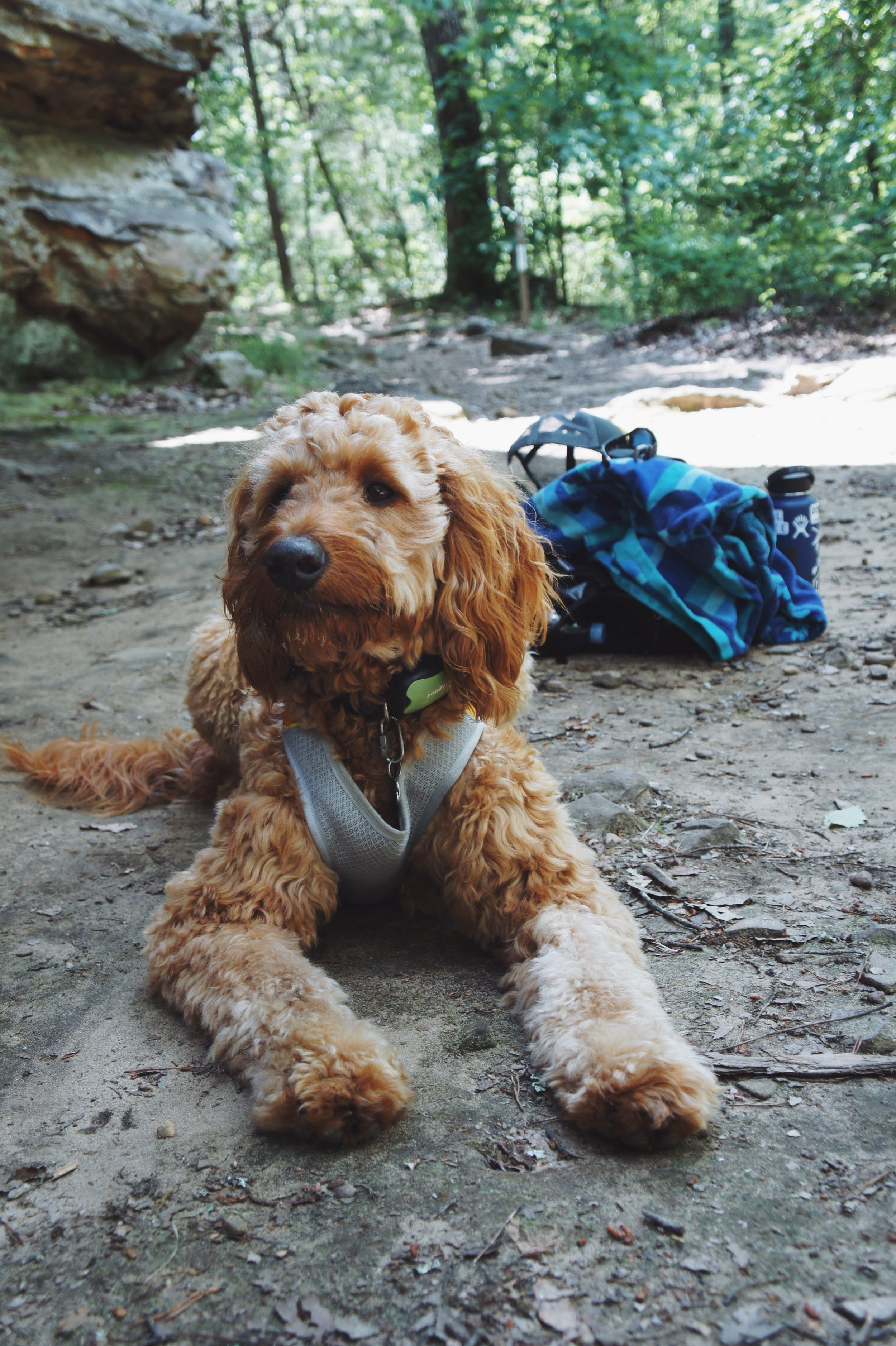 - When we get to the crag, we make sure to have travel food & water bowls for Romeo to eat and hydrate while we hang out, (as well as plenty of treats for when he's a good boy!)We also bring this vibrating dog collar with us whenever we travel. It works really well for Romeo— it beeps the first few times that he barks and if he barks too much it vibrates like a cell phone (never shocks). We usually don't even need to have batteries in it and it works as a placebo and keeps him calm (which he needs to be when people are climbing!)