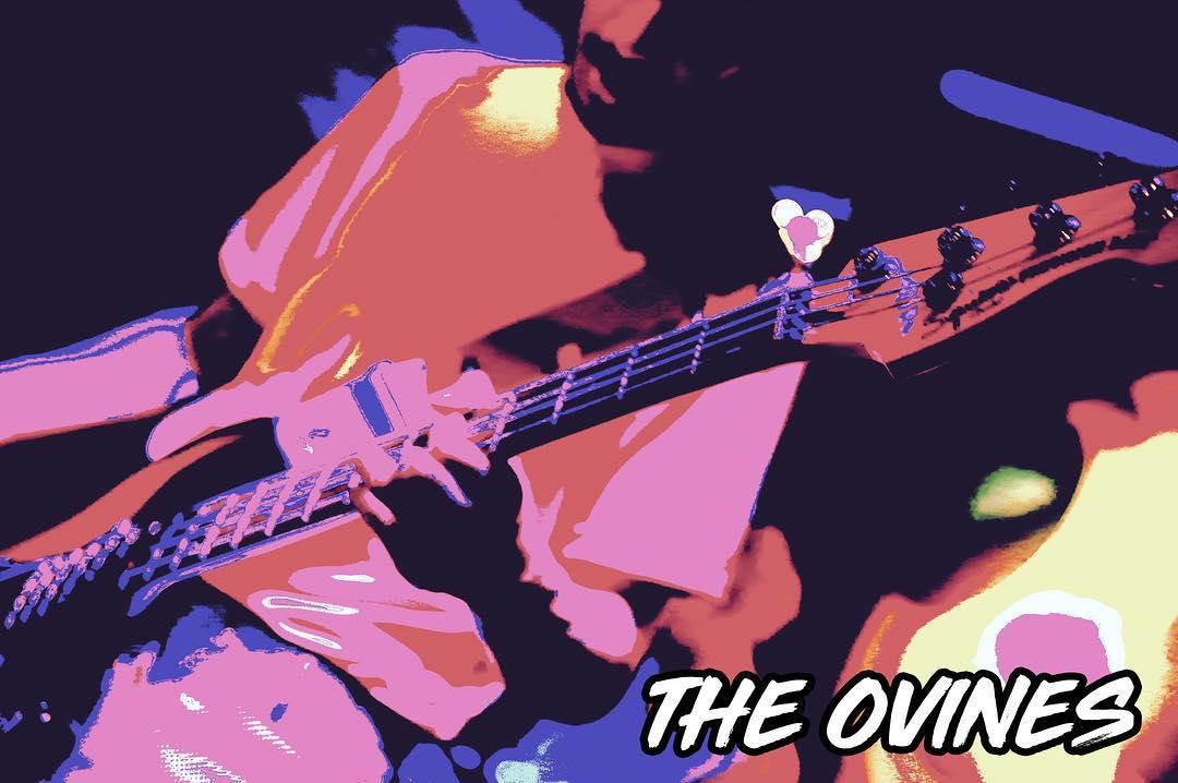 the ovines.jpg