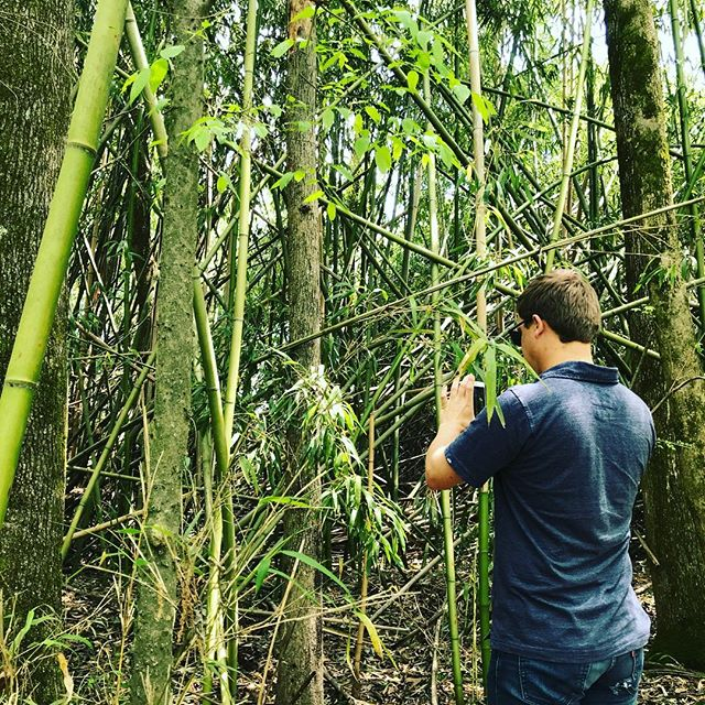 The trail of bamboo material research leads to a National Wildlife refuge @concept_connect @nigel_noriega #landbase #landbased #designideas #imported #designknowledge
