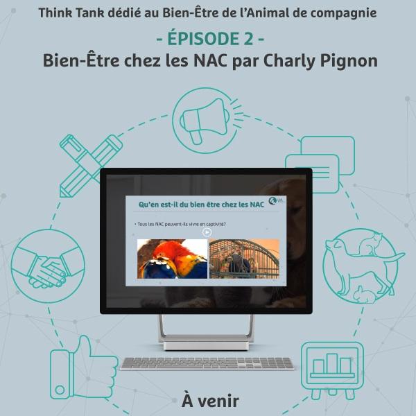 18 janvier 2019 - - ÉPISODE 2 - Bien-Être chez les NAC par Charly Pignon
