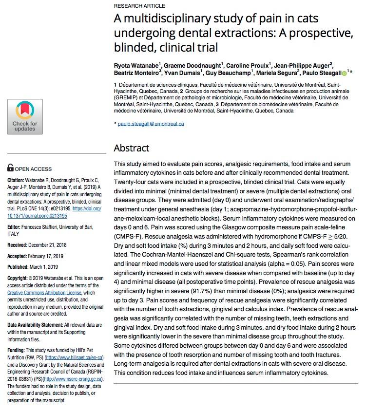 pain cat dental extraction.jpg