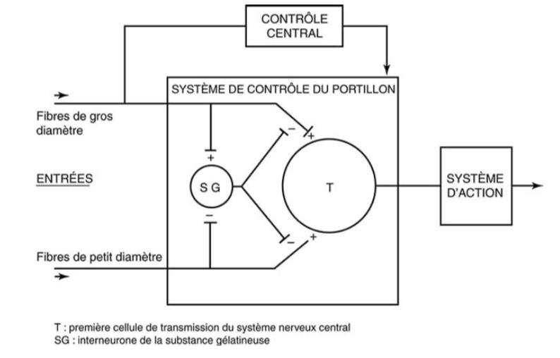 Schéma de la « théorie du portillon » (« gate control theory ») tel que proposé par Melzack et Wall [4] en 1965.