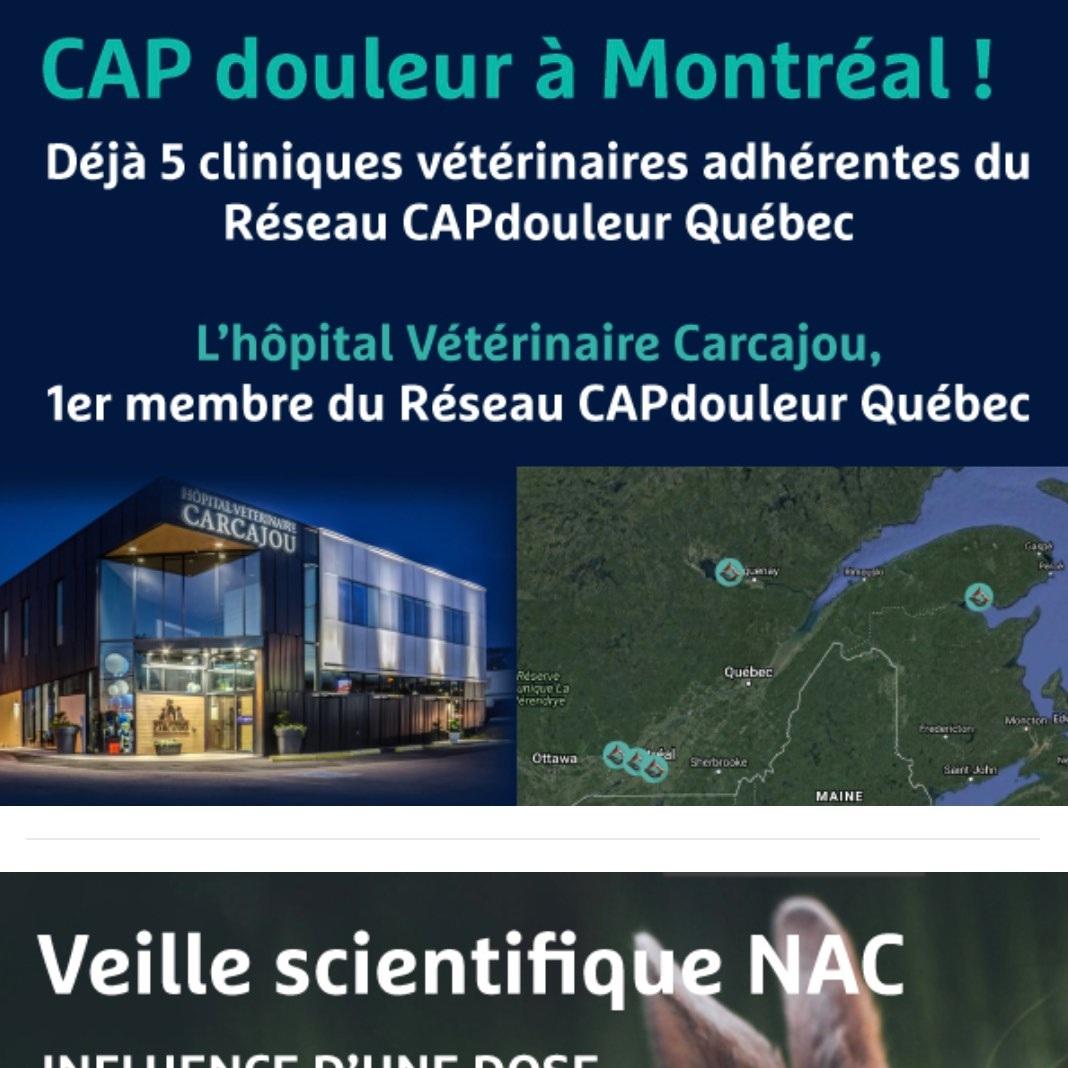 9 AVRIL 2019 - CAPdouleur à MontréalBuprénorphine chez le lapin