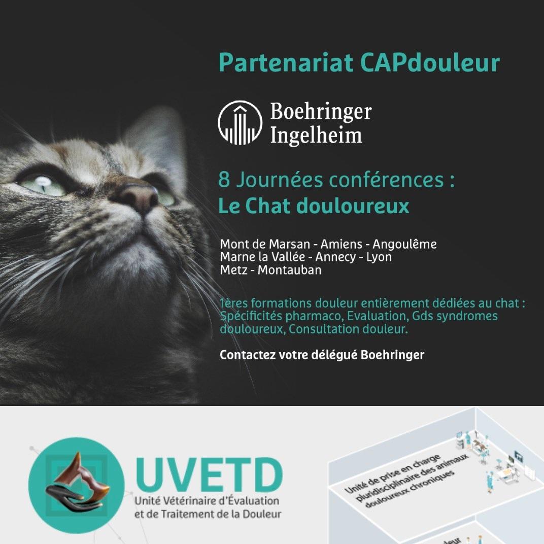 1 AVRIL 2019 - Le chat douloureuxUnités Vétérinaires d'Evaluation et de Traitement de la Douleur
