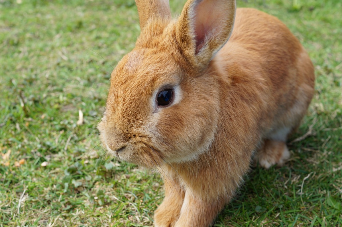 hare_rabbit_bunny_easter_cute_nager_easter_bunny-1389678.jpg