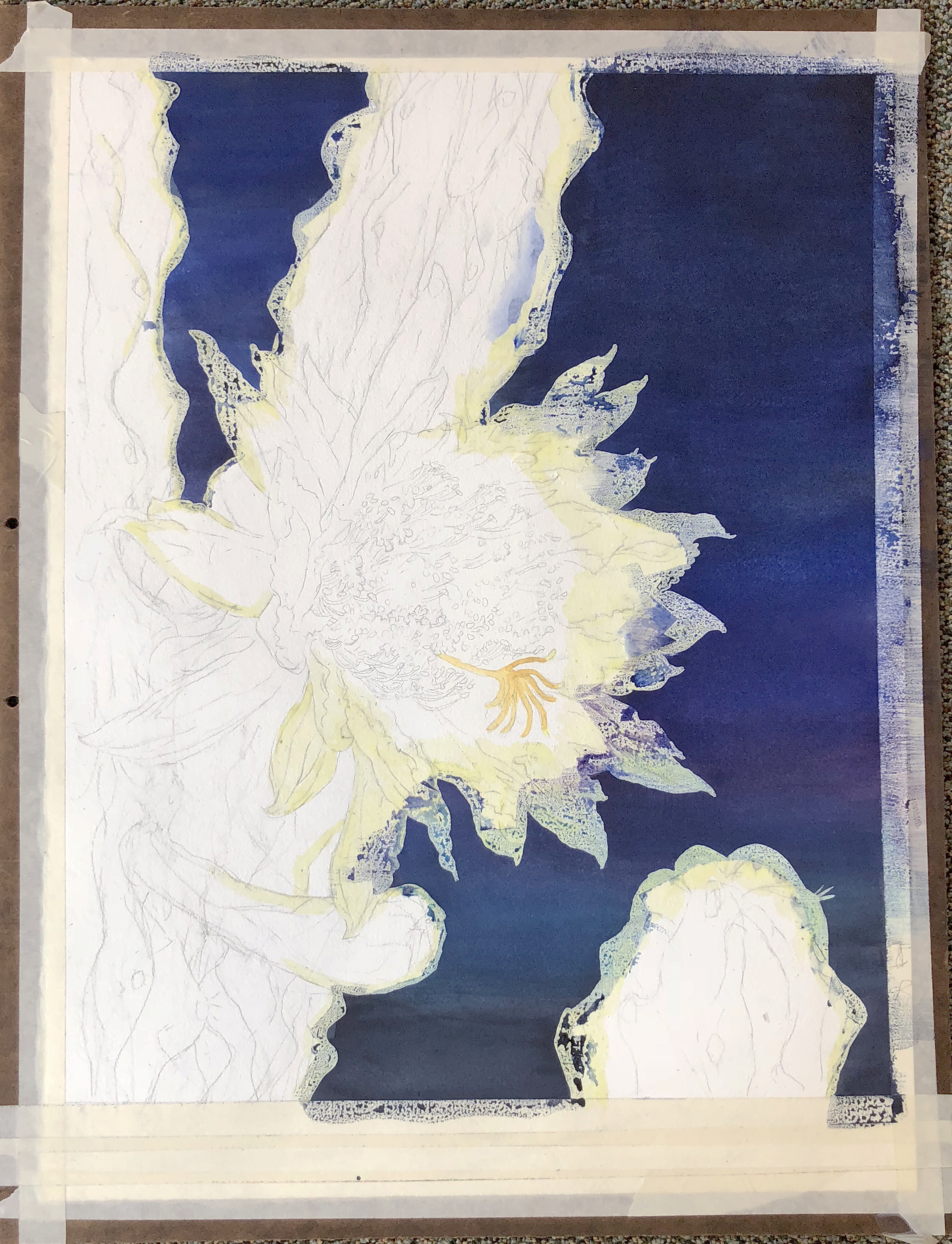 3. A very careful drawing, twice life size of the actual bloom , is transferred onto a sheet of rag watercolor paper, and then a mask is put around the sky area. The night sky is then layered in.