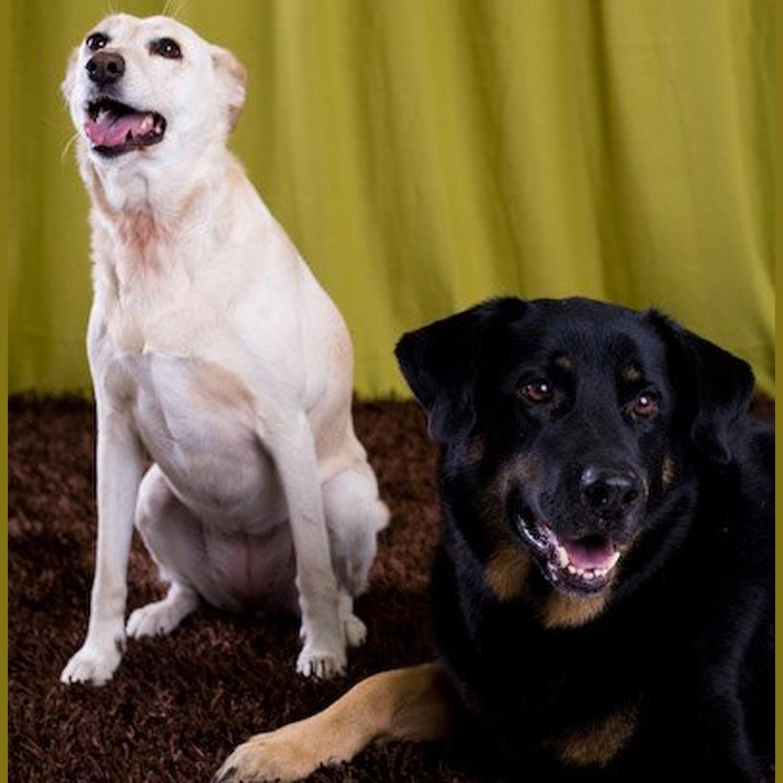 Beulah's housemates,  Hunni and Benny