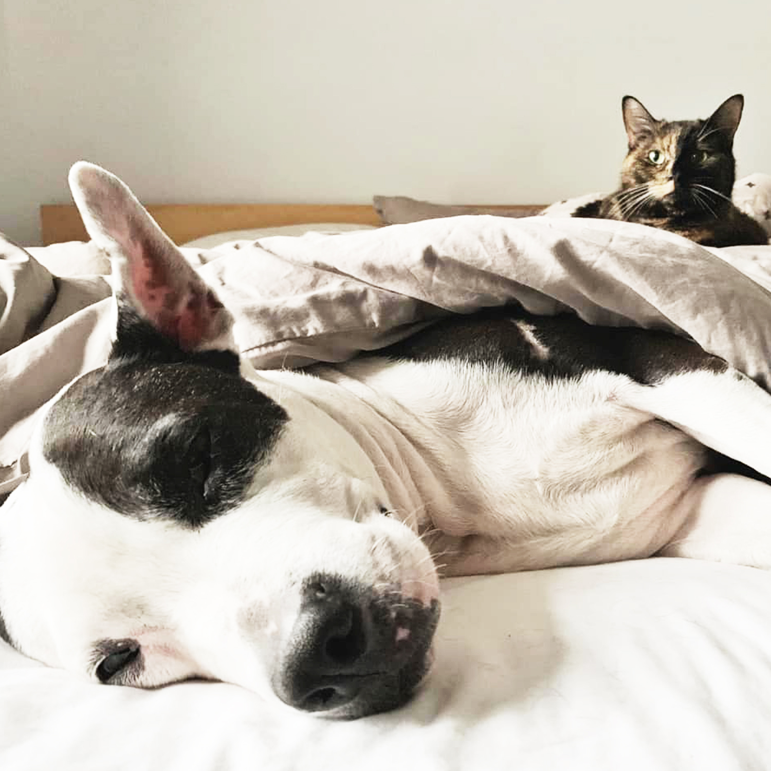 Lily and Scout - Best Friends