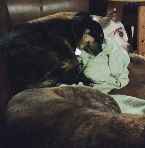 Scoutie  (our favorite foster dog) snuggles up to  Olive  (the best dog ever)