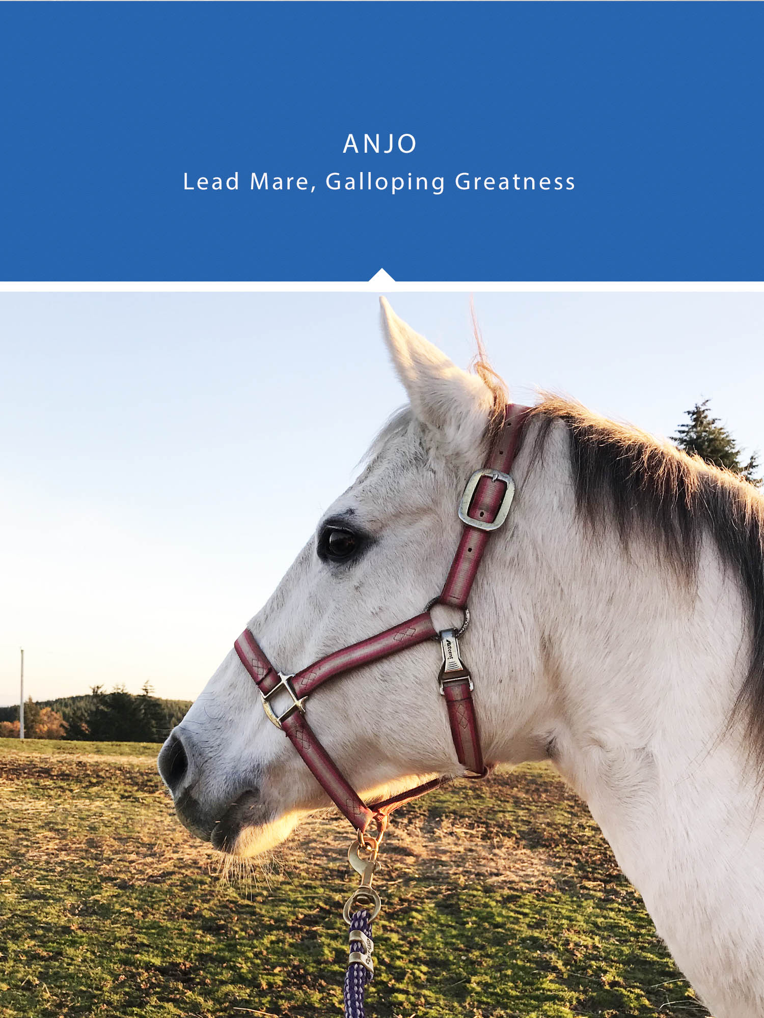 Anjo , lead mare, galloping greatness