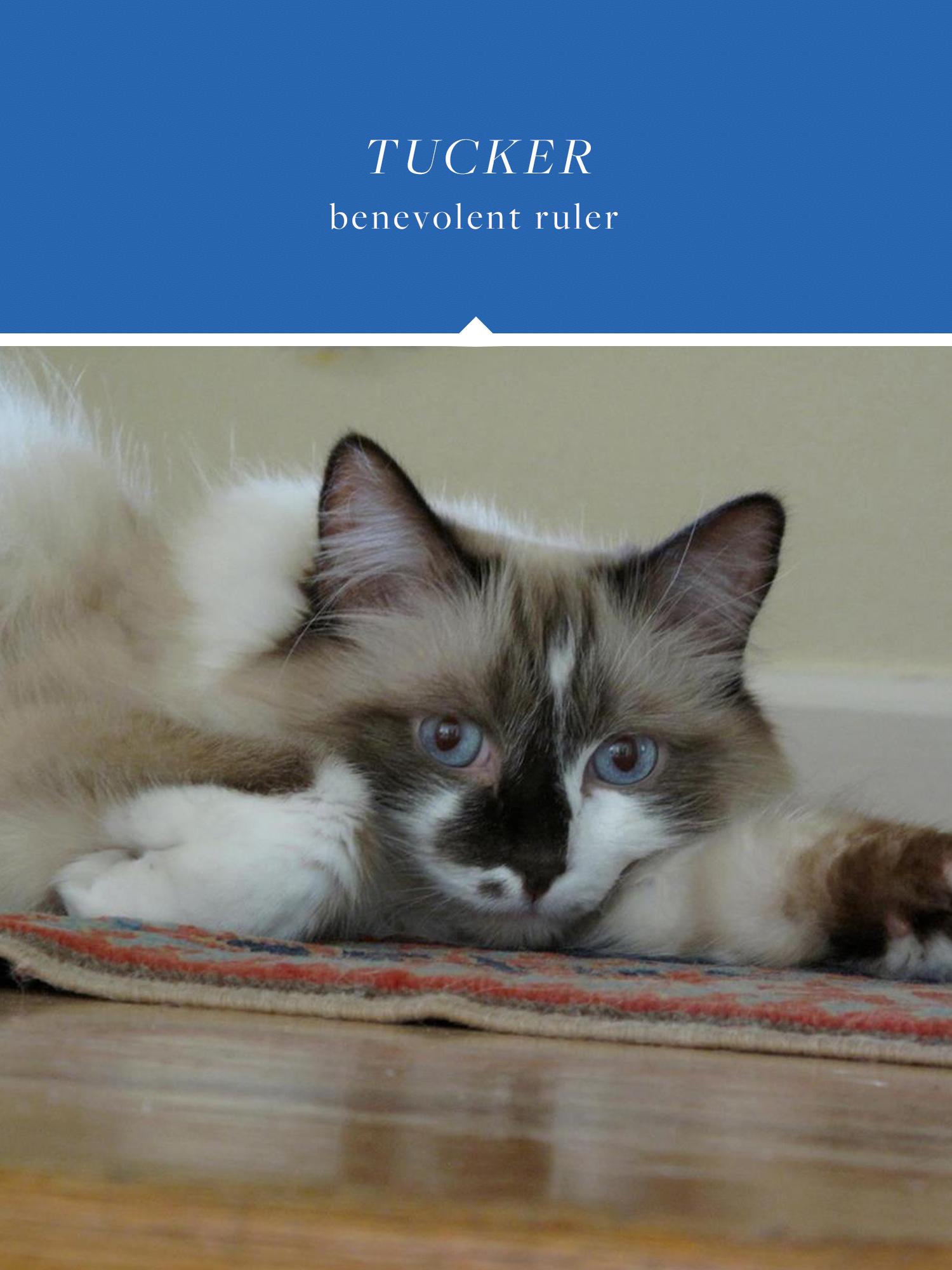 Tucker - the benevolent ruler