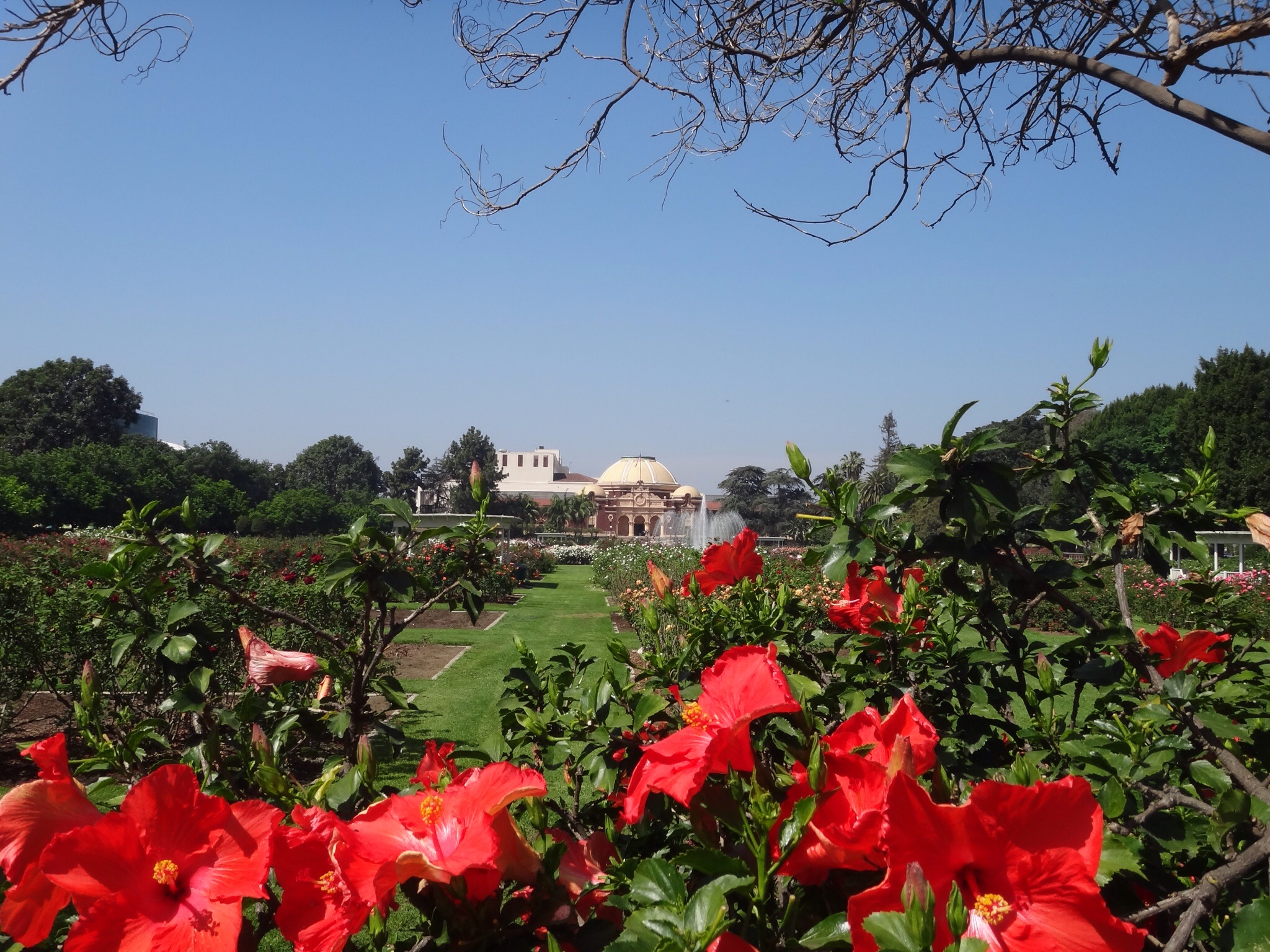 The Rose Garden on the University of Southern California Campus