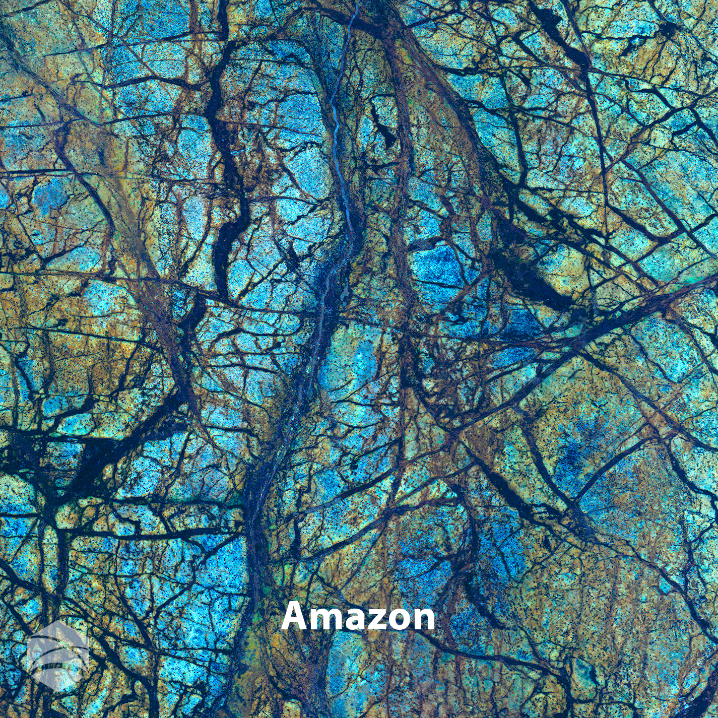 Amazon_V2_14x14.jpg
