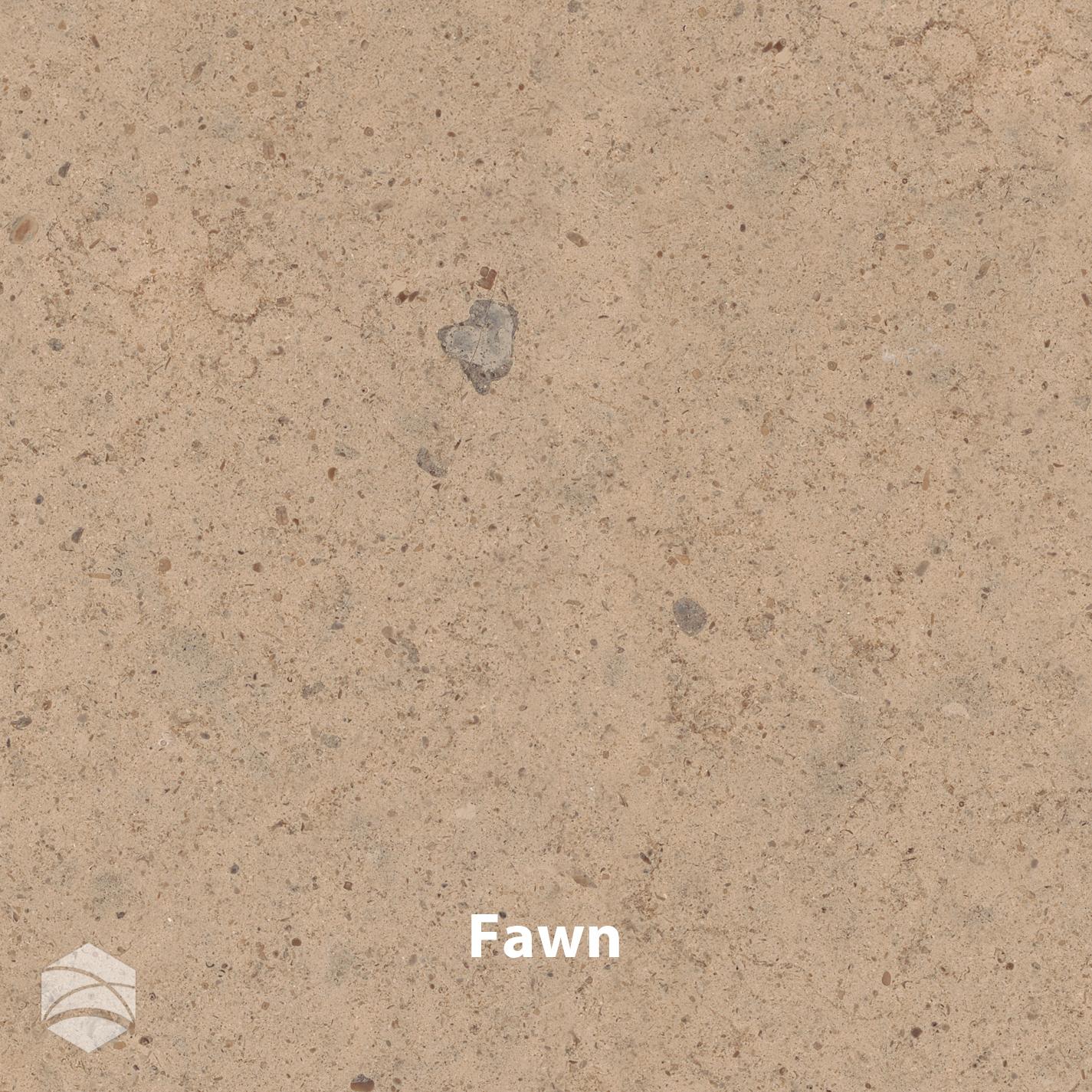 Fawn_V2_14x14.jpg