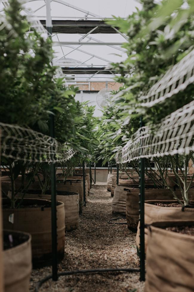 JENNIFER-SKOG-cannabis-farm-lifestyle_0069.jpg