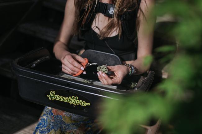 JENNIFER-SKOG-cannabis-farm-lifestyle_0207.jpg