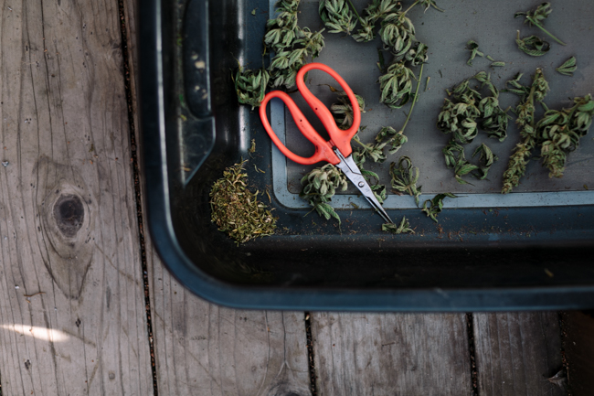 JENNIFER-SKOG-cannabis-farm-lifestyle_0209.jpg
