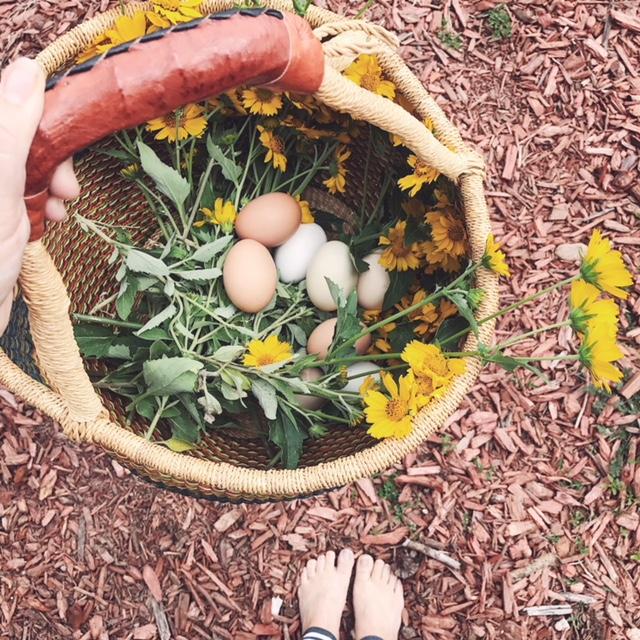 colorado-springs-farm-fresh-eggs.JPG