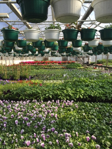 North River Greenhouse & Landscaping IMG_0179.jpg