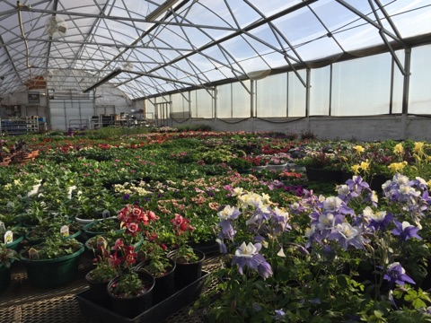North River Greenhouse & Landscaping IMG_1391.jpg