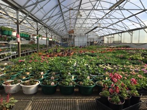 North River Greenhouse & Landscaping IMG_1392.jpg