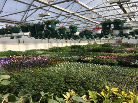 North River Greenhouse & Landscaping IMG_1393.jpg