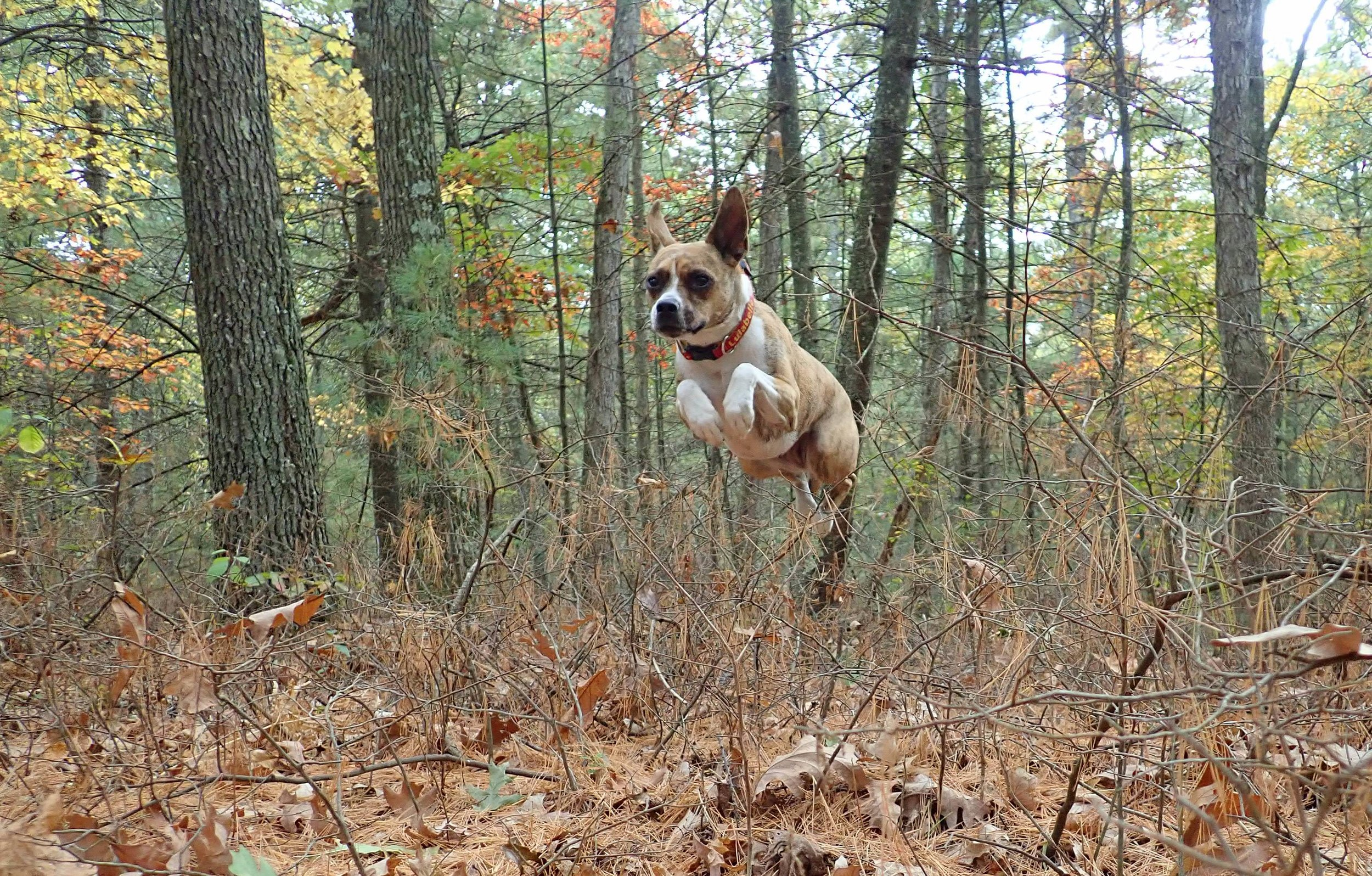 -   Take a Leap and follow the Dog Crew on Facebook and Instagram