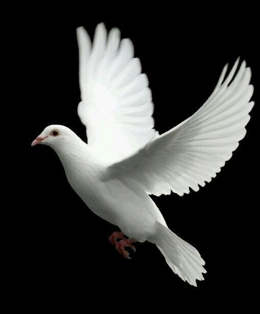 dove good.jpg