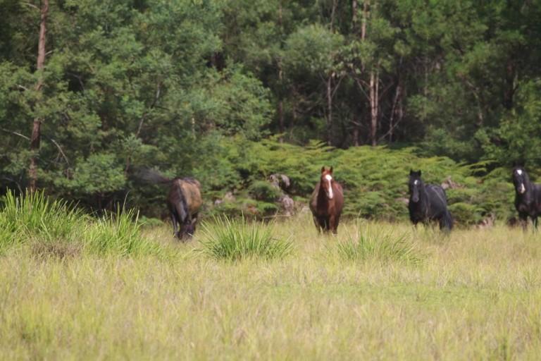 horse-burragorang-valley1-768x512.jpg