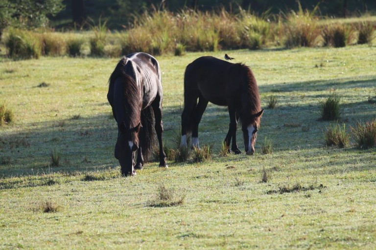 horse-burragorang-valley2-768x512.jpg