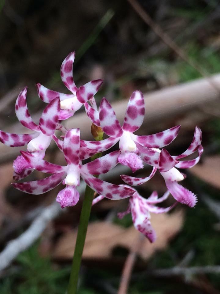 orchid_5.jpg