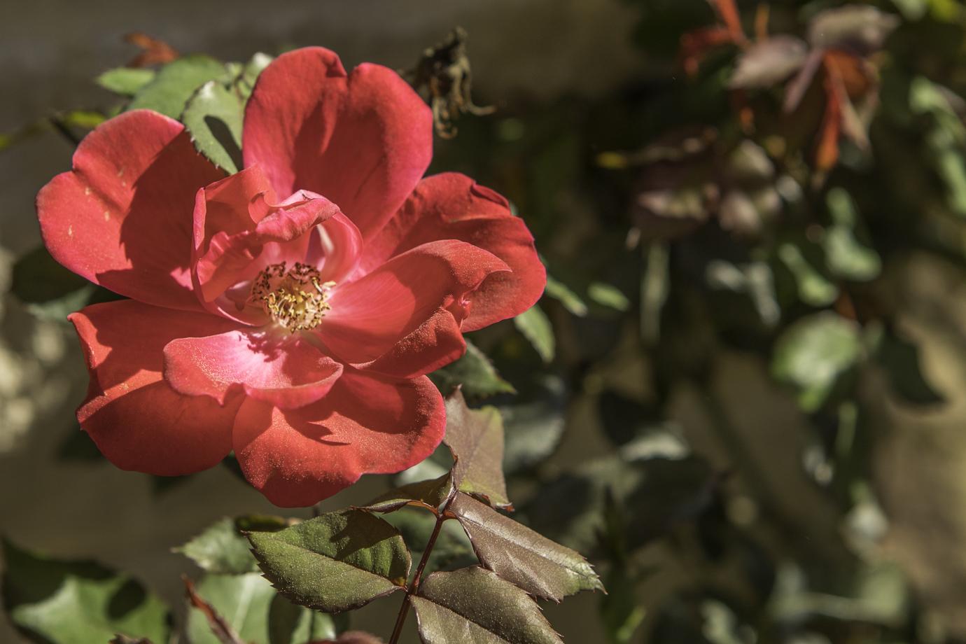 flowers (2 of 4).jpg