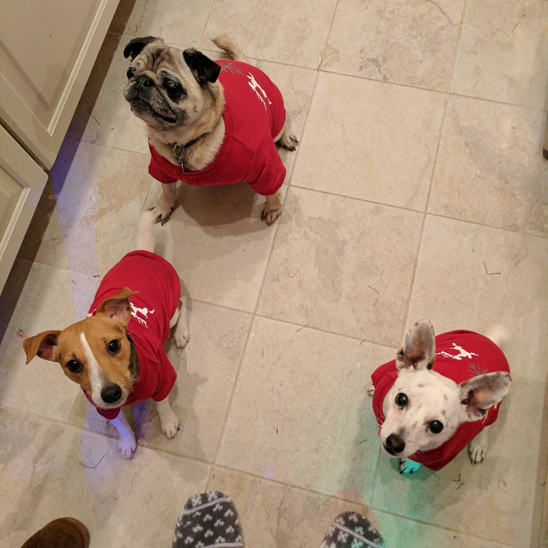 Of course we include the dogs in our Christmas onesie tradition