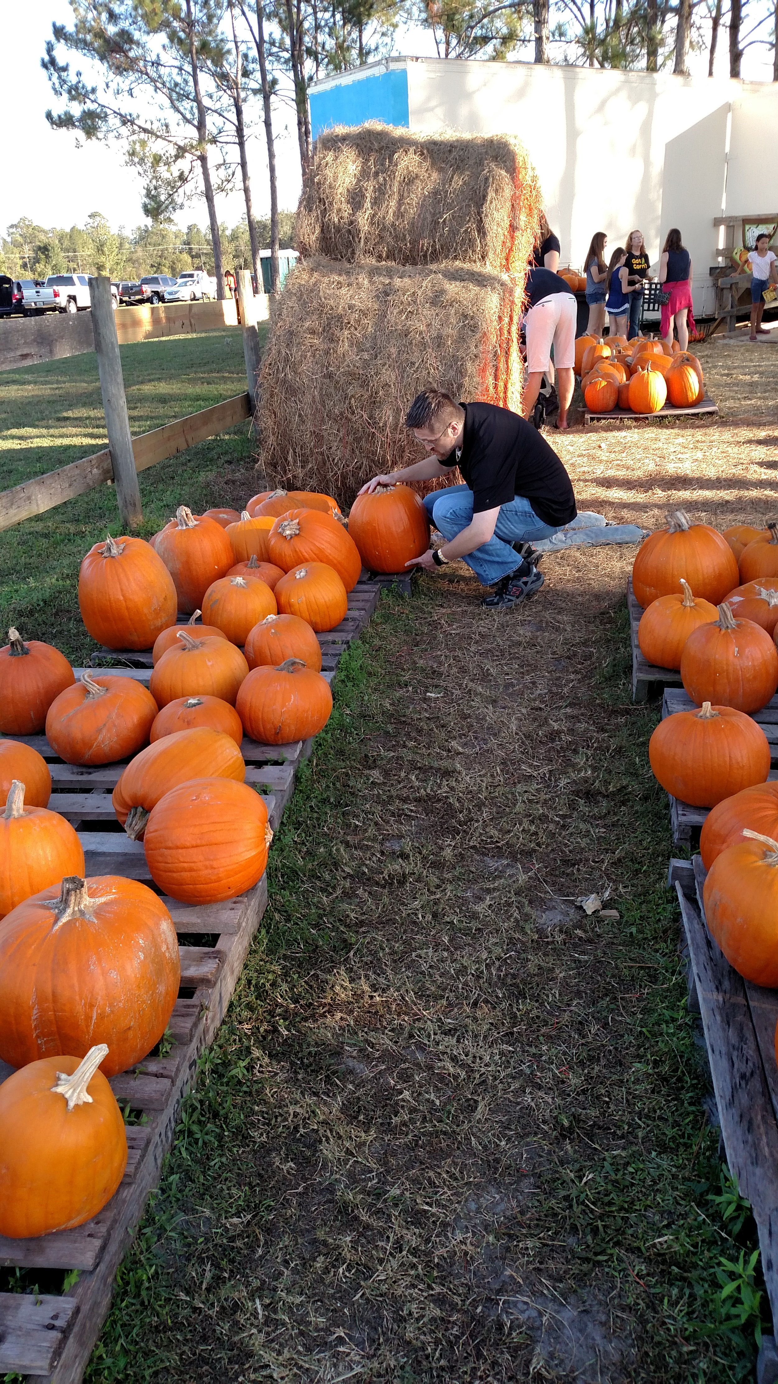 Picking our pumpkins