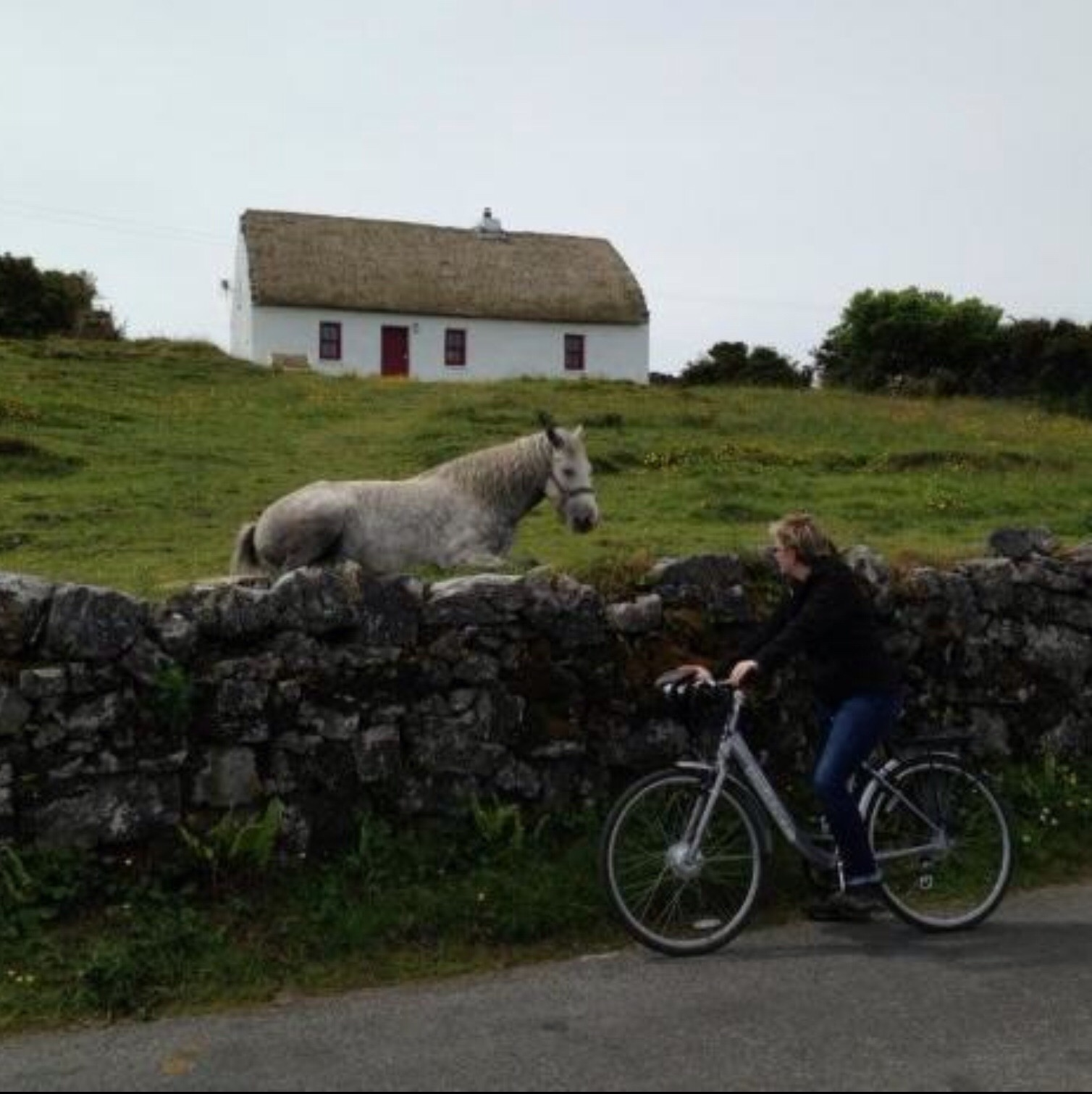 Meg stops to say hello to a horse in Ireland.