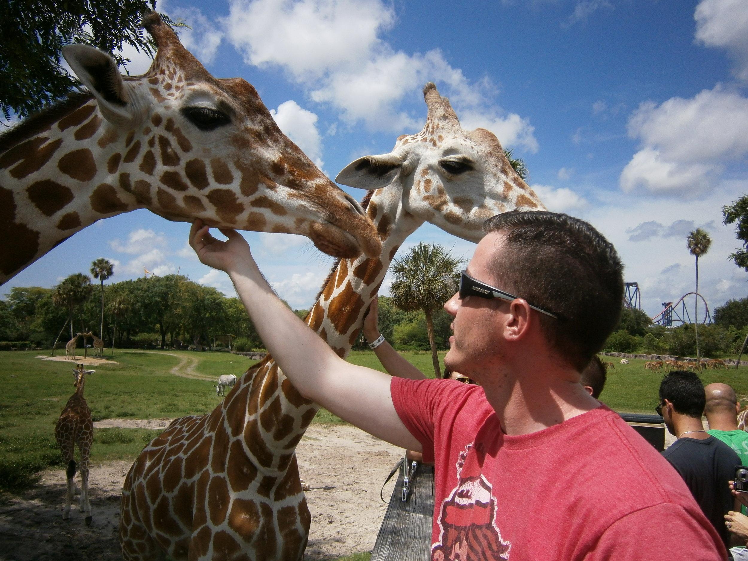 Feeding and petting giraffes in Tampa