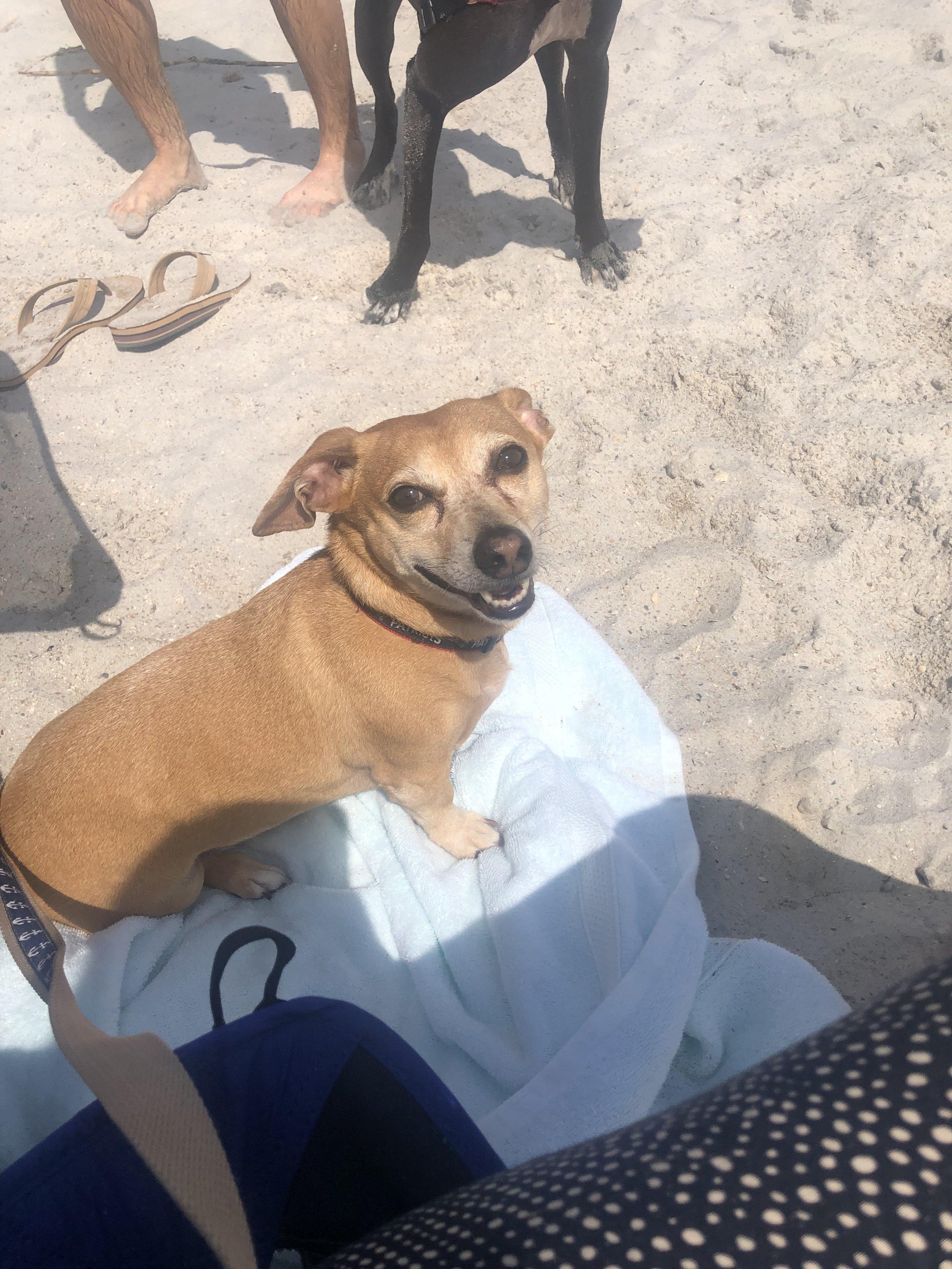 Snoopy the beach bum