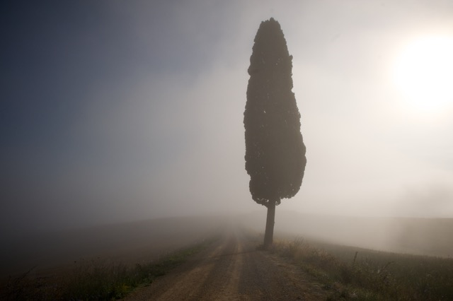 Siena-Dan 34 (1).jpeg