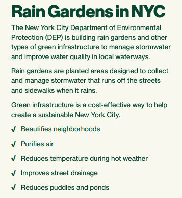 NYC_raingarden_about.png