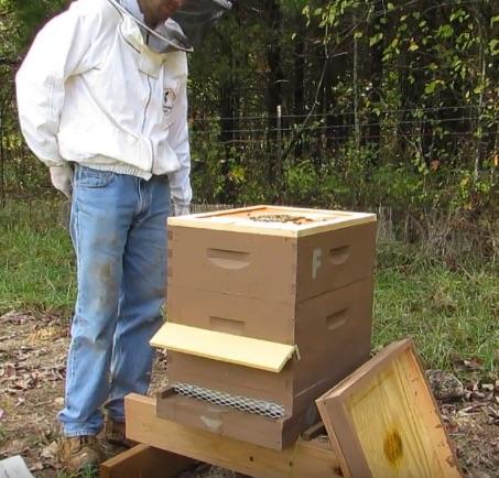 Winterizing a bee hive