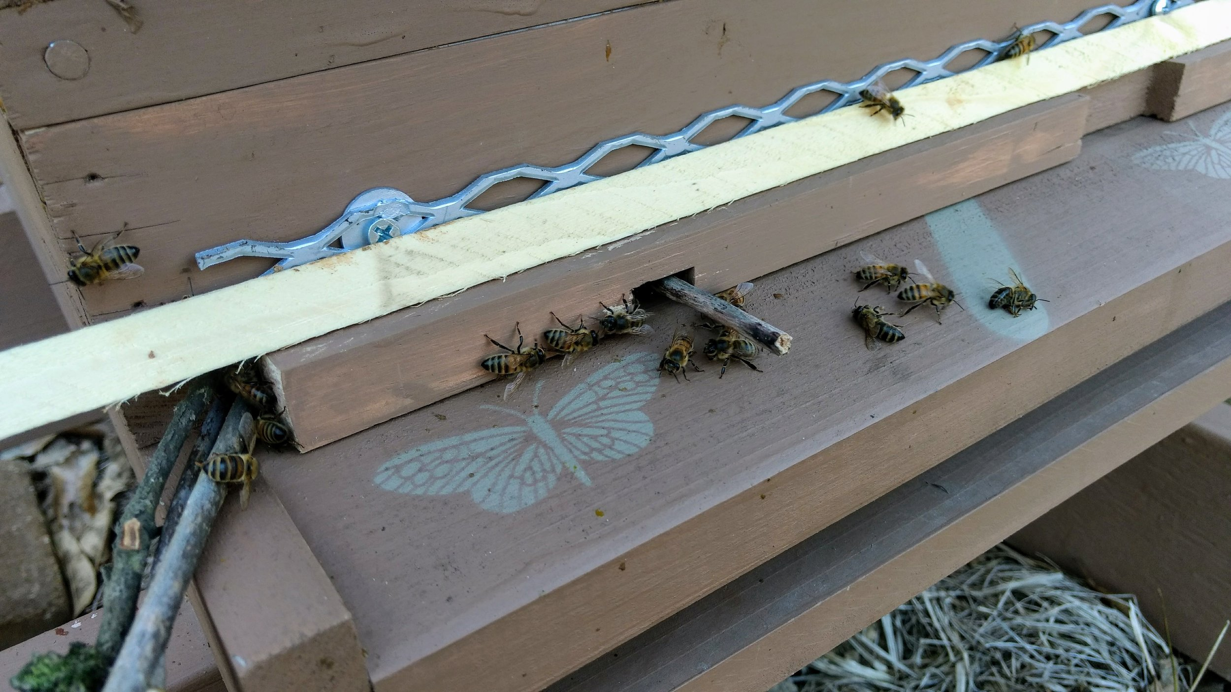 Sticks used to reduce entrances into a hive being robbed.