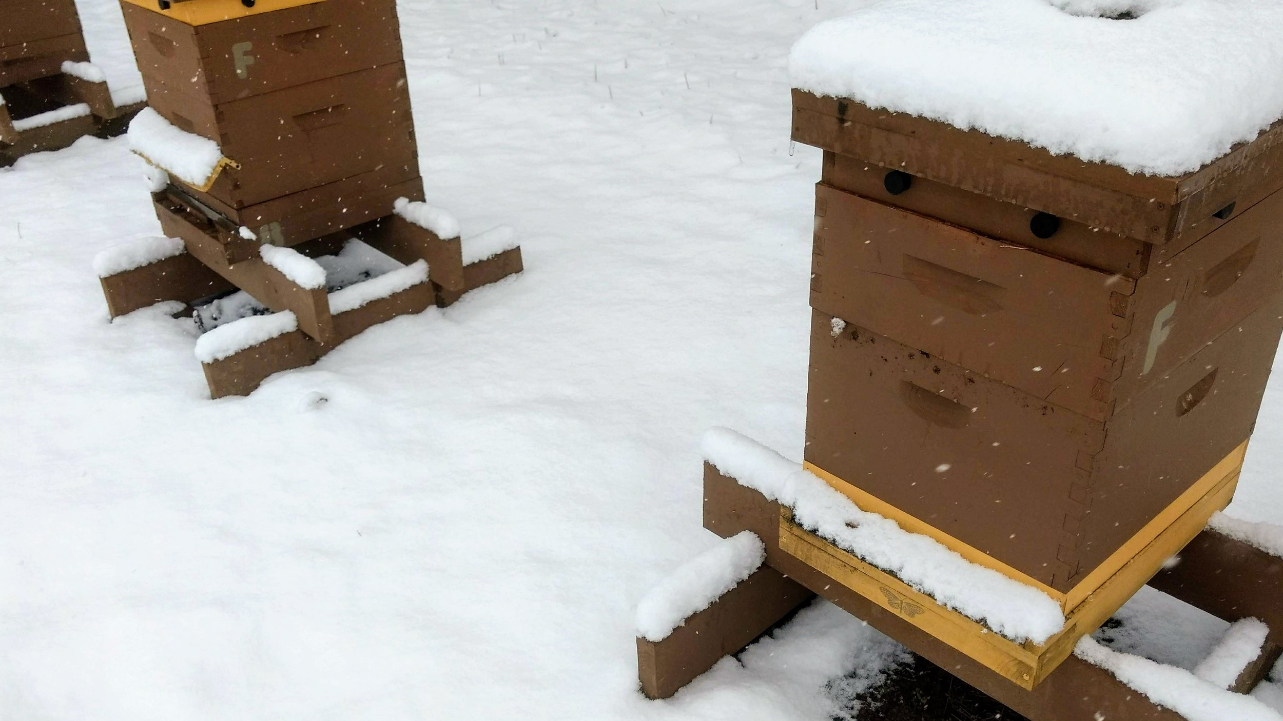 Hive with a snow visor on the left, without on the right