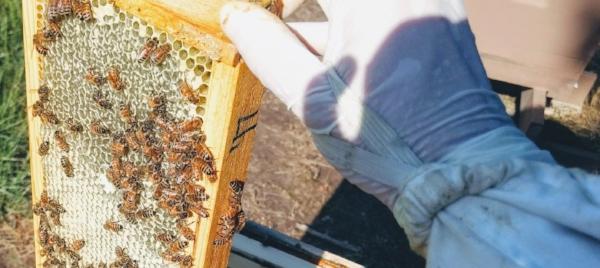 Proper handwear can make beekeeping more enjoyable